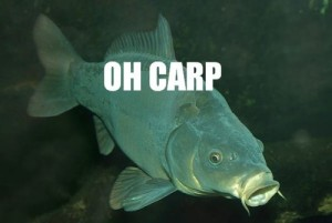 The Misunderstood Carp
